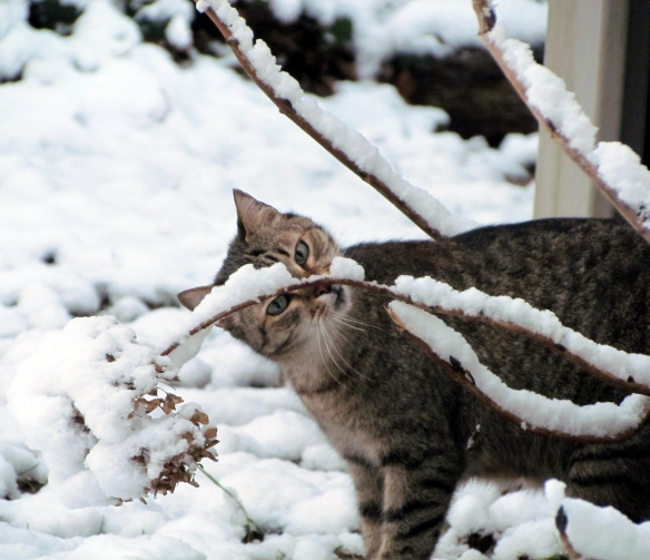Tigger, our West African cat, wonders about this white stuff!